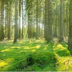 Waldwachstum in Deutschland