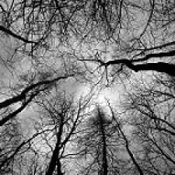 Bäume gehören zu den größten Lebewesen der Erde